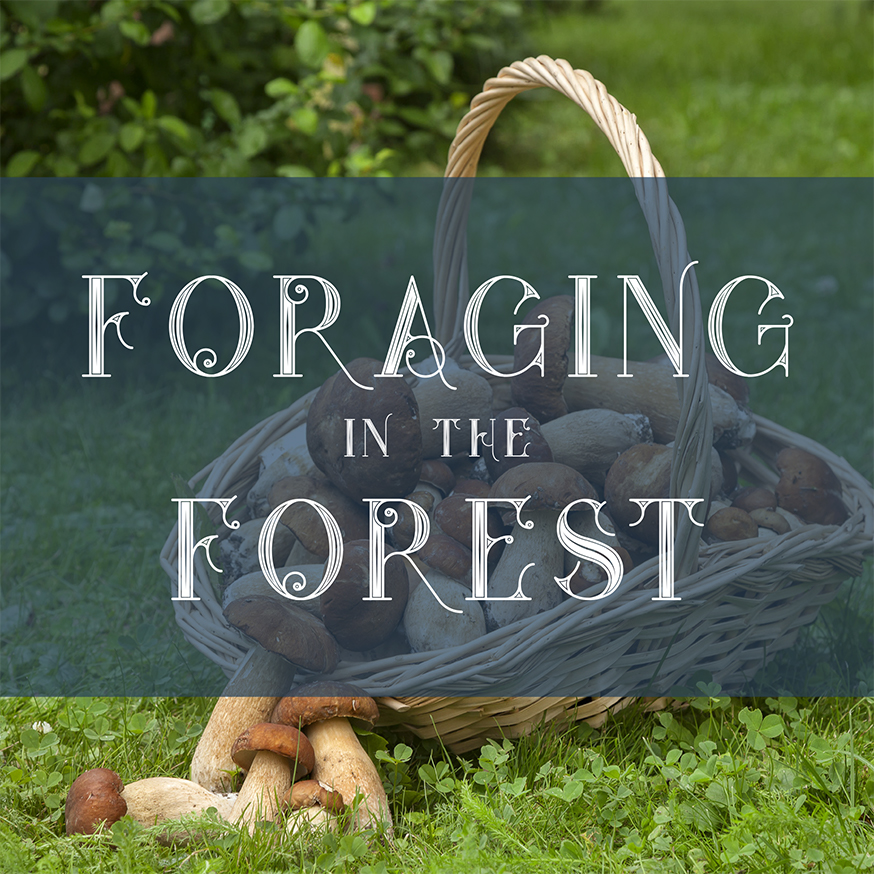 the crown bray foraging in the forest